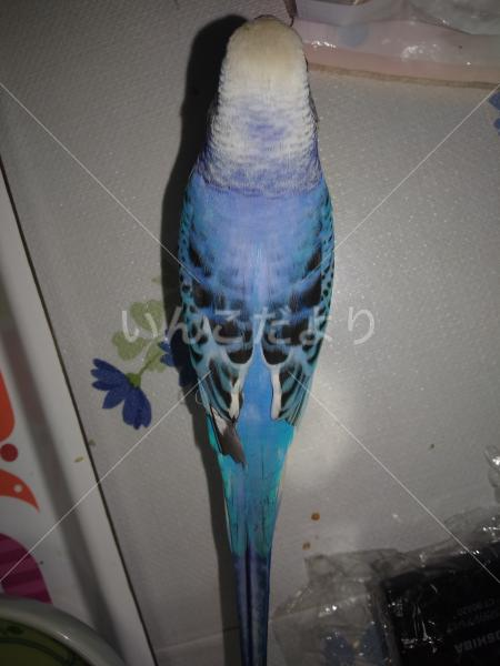 保護鳥の写真