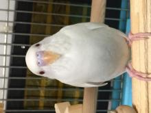 愛鳥さんの写真