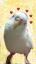 ユーザー ポンちゃん の写真
