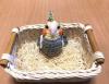 ユーザー 1115阿亀鸚哥 の写真