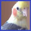 ユーザー しづちゃんの飼い主 の写真